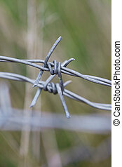 Macro of  barbed wire on a green background