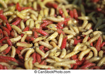 Worms - Several worms in red an yellow. Invertebrate bugs