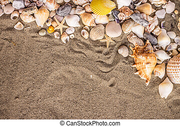 sand and shekk - Composition of sand, shells, stones and...