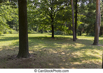 Forest Clearing - clearing in a dense evergreen forest