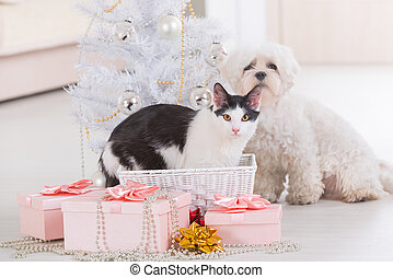 Cat and little dog sitting together near Christmas tree -...
