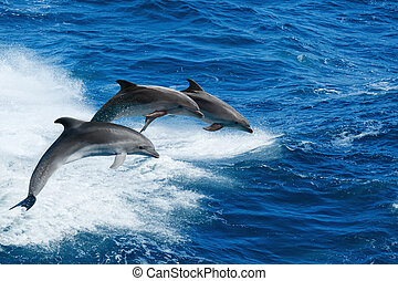 Three dolphins - Marine wildlife background - three...