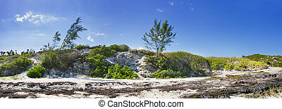 Coast vegetation panorama