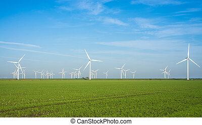 moinho de vento, poder, planta,