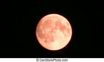 fly moon - Fly moon