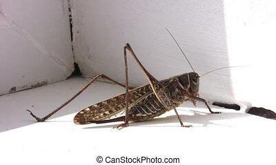 locust - Locust