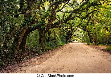 roble, árboles, por, el, Suciedad, camino, a,...