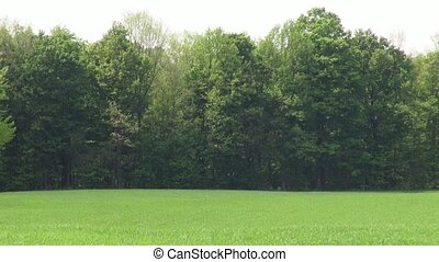 Forest, Woods, Trees, Foliage,