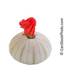 Hibiscus Mollusk Vase