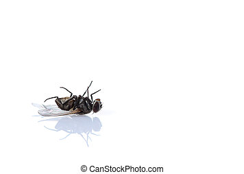 fly on a white background.