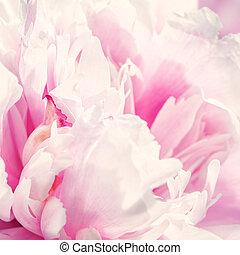 Defocus beautiful pink flowers.
