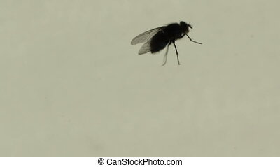 Creepy Fly Walking - Tracking a creepy bug with long legs on...