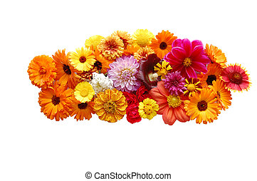 Flowers with petals of various colours on a white background