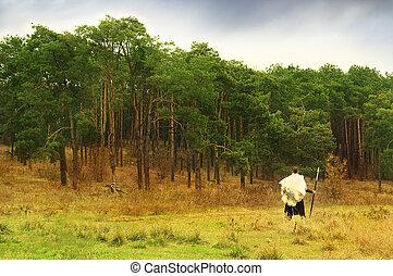krieger, uralt, steht, Speer, Wälder, vorher