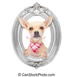 dog in a frame - chihuahua dog portrait within a retro old...