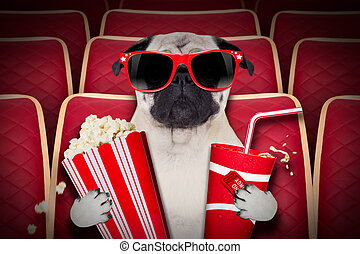 dog at the movies - dog watching a movie in a cinema...