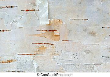 White Birch Tree Bark Texture Macro