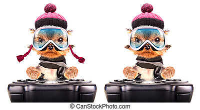 dog  dressed as skier play on game pad isolated