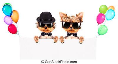 chien, habillé, comme, mafia, gangster, à,...