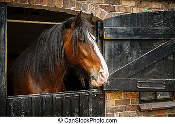 Horse in stable - Dark brown horse looking out of stable