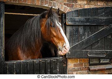 cavalo, em, estável,