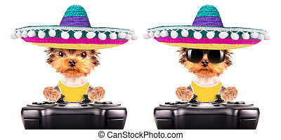 dog wearing a mexican hat play on game pad - cute puppy dog...