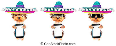 dog wearing a mexican hat with phone - cute puppy dog...