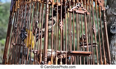 bird in a cage - little bird in a wooden cage