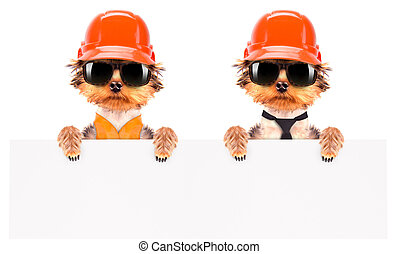 dog dressed as builder with banner - dog dressed as builder...
