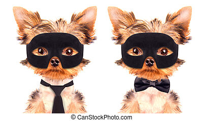 super hero puppy dog wearing a black mask