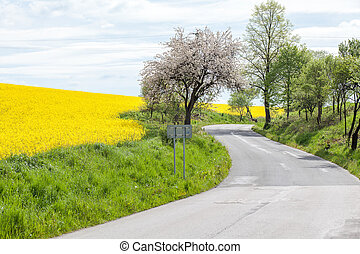 Rapeseed field and road, Slovakia