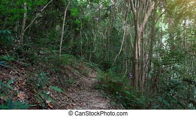 Young fitness woman running in jungle forest on Koh Samui....