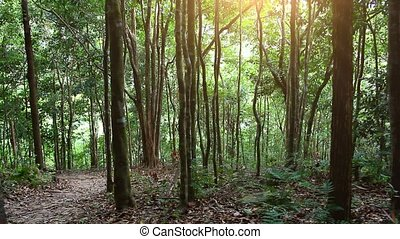 Sunbeam shine thru the tropical green forest. HD. 1920x1080....