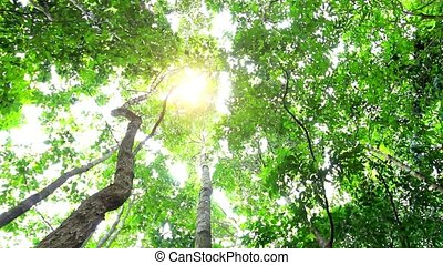 Sun in deep jungle forest.