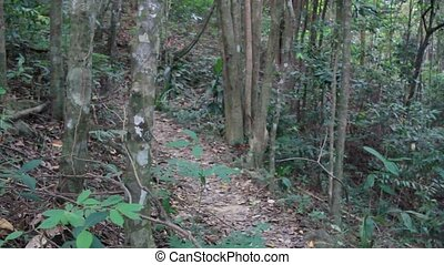 Along man walking with photographic equipment in tropic jungle