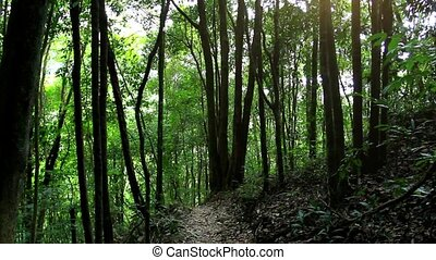 Sunbeam shine thru the tropical green forest. Koh Samui -...