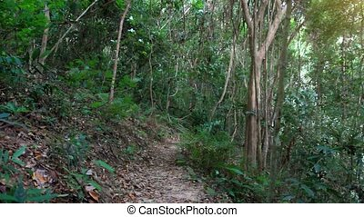 Young fitness woman running in jungle forest on Koh Samui -...