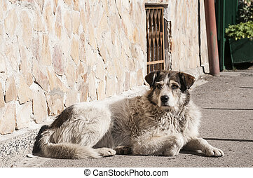 Street adult mixed breed dog lying next to house wall lit by...