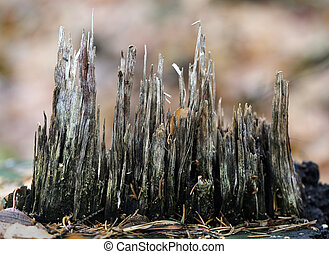 wood chips on a stump in the forest photographed close up