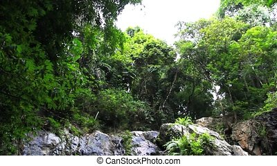 Tropical rainforest landscape with beautiful waterfall,...