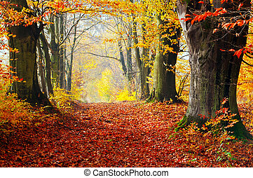 Autumn, fall forest. Path of red leaves towards light. -...