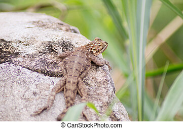 reptile in the sun - when it's hot, reptiles often come to...