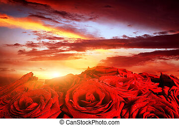 Red wet roses flowers on dramatic, romantic sunset sky Great...