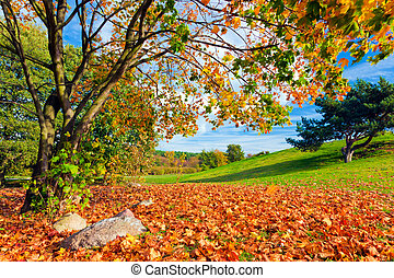 Autumn, fall landscape. Tree with colorful leaves. Panorama...