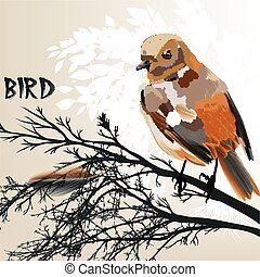 Colored bird sit on a branch tree - Vector illustration with...