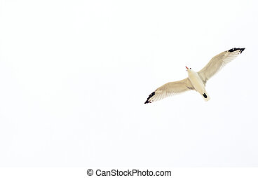 Seagull flying in the sky. Place for your text.