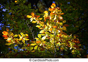 Autumn leaves in sunny day