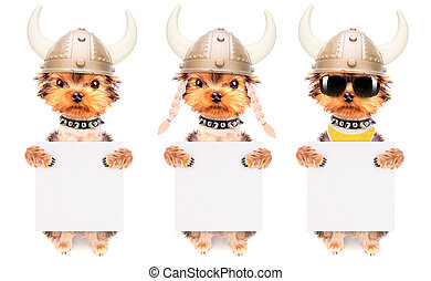 dog dressed up as a viking with banner - dog dressed up as a...
