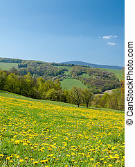 Wildflower meadow - Meadow on a hillside covered with...