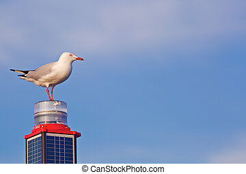 White seagull on a pile with skyes on a background
